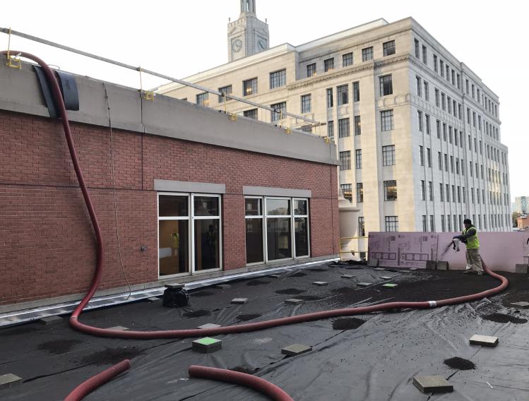 Turf Green Roof Media Type